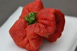 La fresa más grande del mundo