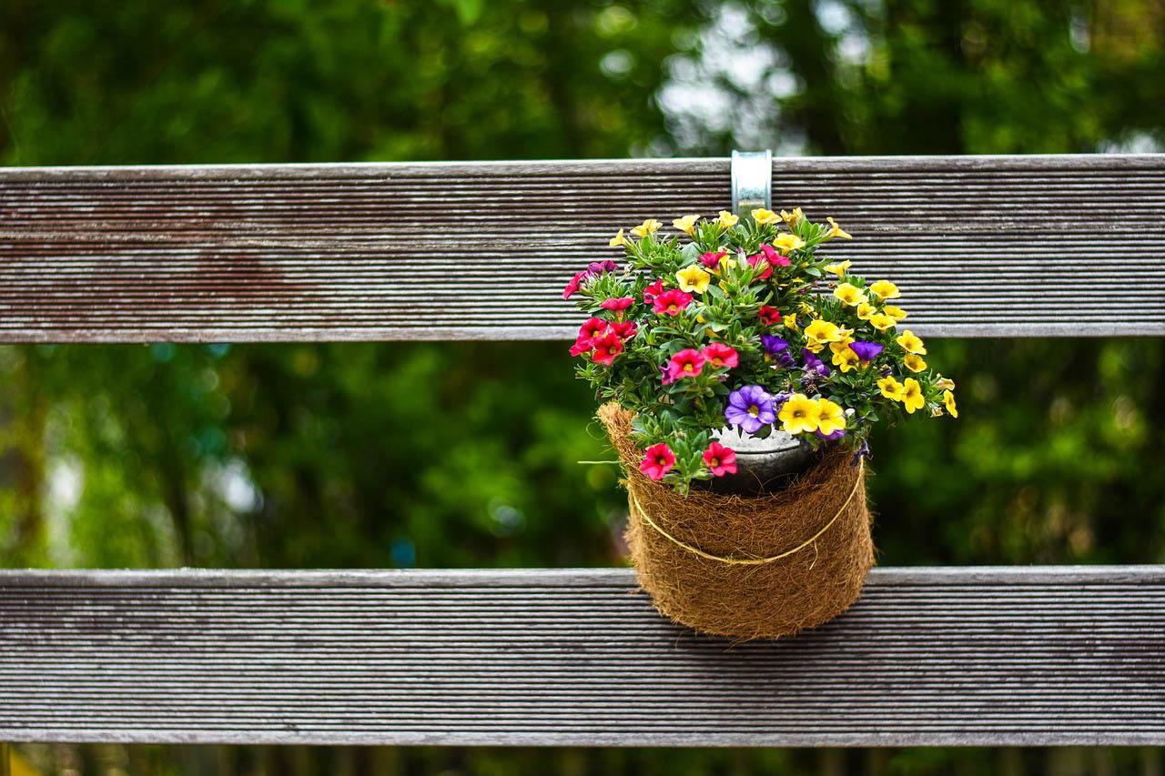 Plantas de exterior quieres saber que plantas aguantan - Plantas aromaticas exterior ...