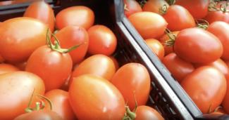 Una caja de tomate pera