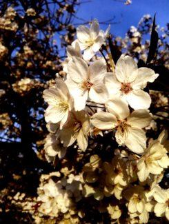 Otro tipo de flor de vainilla