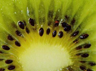 Corte vertical del kiwi