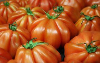 Monton de tomates rosas sin madurar
