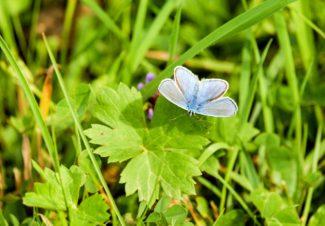 Una mariposa atraída por el la planta