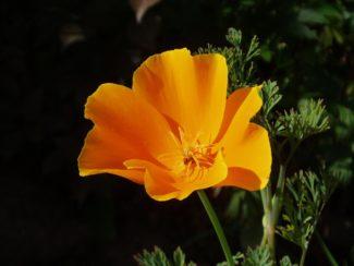 Los rayos de sol inciden sobre la flor creciendo diferentes tonalidades