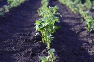 Plantas pequeñas brotando del suelo