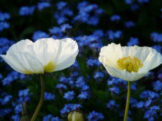 Discretas flores blancas menos comunes