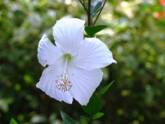La flor coronando el árbol